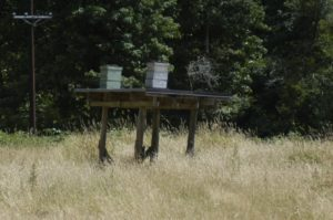 Hives on a stand to discourage bears.